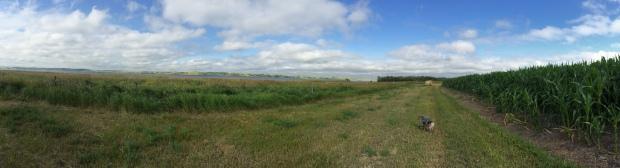 Panoramic - River Vinny Fields