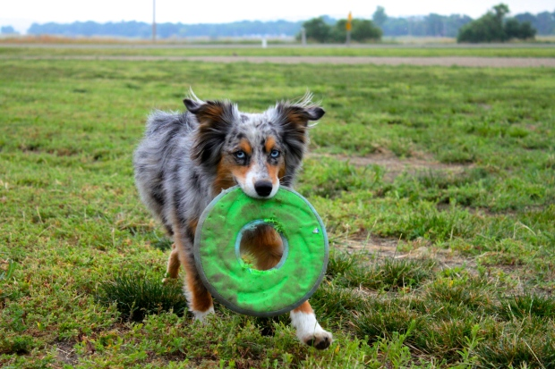 Vinny and Frisbee